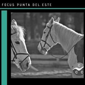 María Laura Godoy: Bionergética y equitación